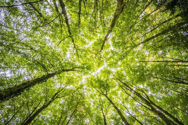 Tropical Canopy Loss: The Laws To Protect It