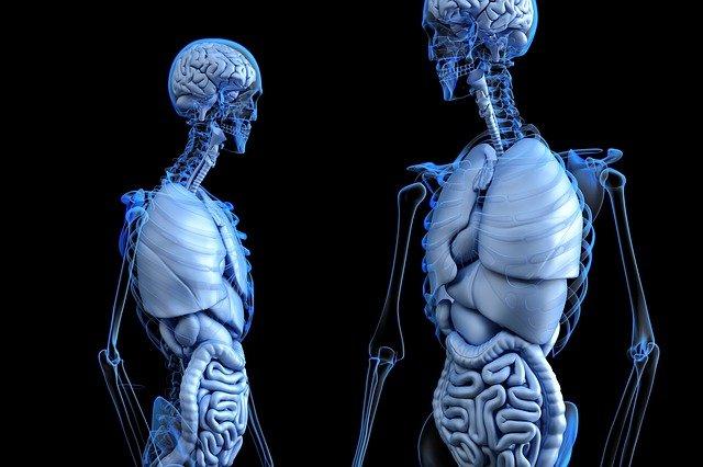 Laws Governing Organ Transplantation: Indian Perspective