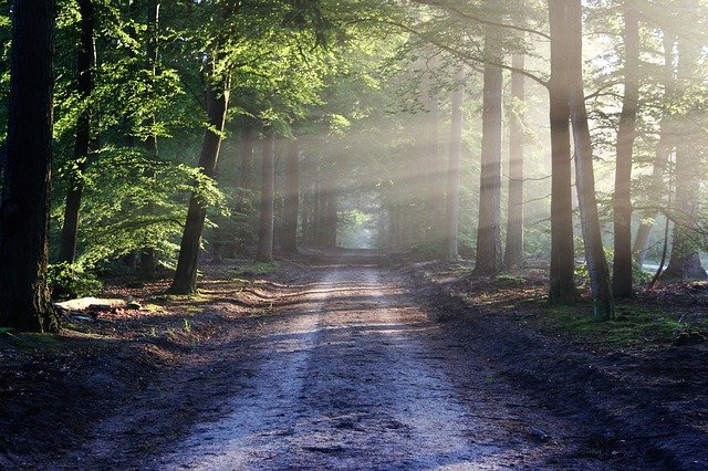 An Understanding of the Laws Relating to Reserved Forests, Village Forests and Protected Forests